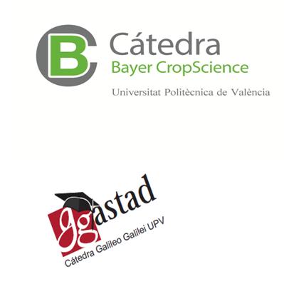 Cátedra Bayer y Cátedra Galileo de la UPV colaboran con el proyecto de Nueva York